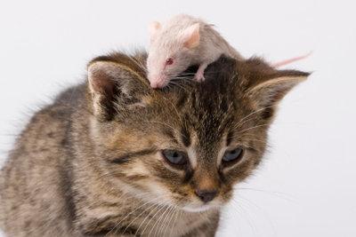 Katzen lieben Mäuse.