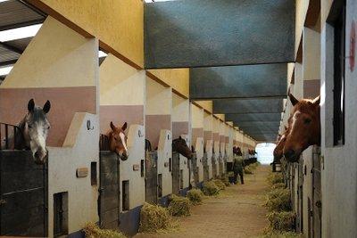 Pferdeboxen selber bauen ist nicht schwer und erlaubt auf eigene Vorstellungen einzugehen.