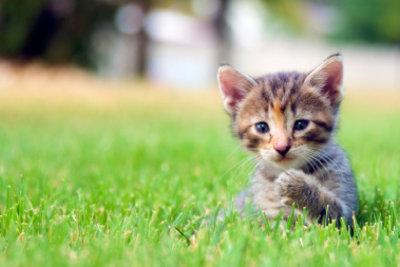 Mit dem GPS-basierten Pet-Tracking geht Ihre Katze nie mehr verloren.