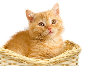 Hat Ihre Katze das Katzenklo verfehlt, können Hausmittel gegen das Katzenurin helfen.