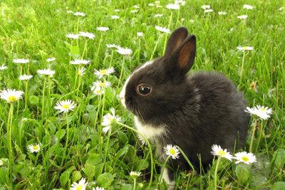 Kaninchenfutter sollte nicht gedüngt oder gespritzt sein.