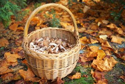 Genießbare Pilze finden Sie am besten im Oktober.