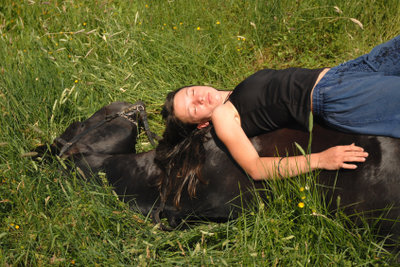 Liegende Pferde vertrauen Menschen.