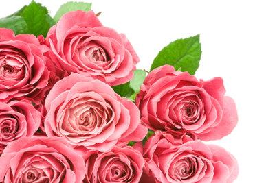 Blumen sind immer ein gutes Gastgeschenk.