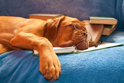 Überfressene Tiere brauchen unbedingt Ruhe!