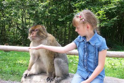 Erleben Sie die Affen hautnah.