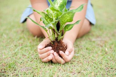 Gärtner ist für viele ein Traumberuf.