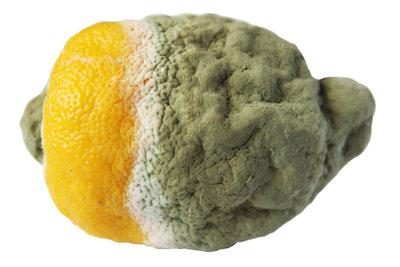 Schimmel verdirbt Zitronen, Fleisch nicht unbedingt.