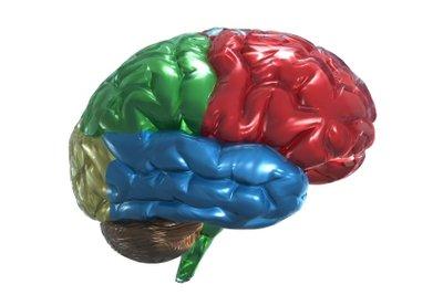 Kreatin ist wichtig für das Gehirn.