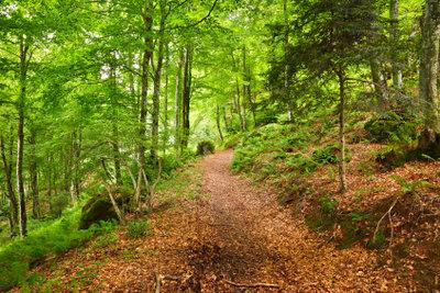 Nutzen Sie den Waldspaziergang, um mehr über Bäume zu erfahren.