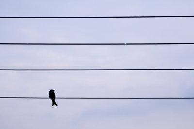 """Dieser Vogelschiss wird garantiert ein """"E"""" !"""