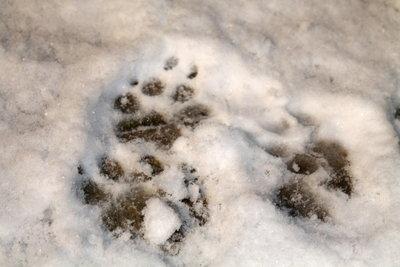 Hier war ein Hund im Garten unterwegs.
