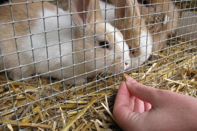 Kaninchen lieben besonders frische Kräuter.