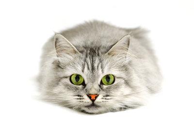 Auch Katzen mögen das Clickertraining.