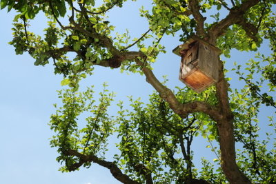 Singvögeln ein sicheres Zuhause bieten.