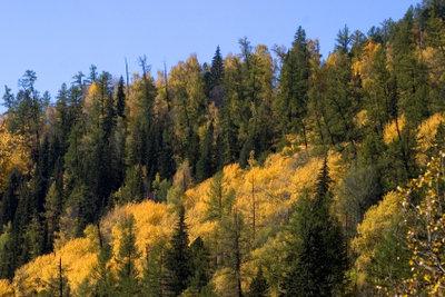 Kaufen Sie sich ein idyllisches Waldgrundstück.