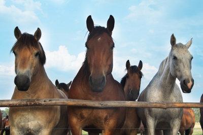Das Pferdemark heißt nicht nur so.