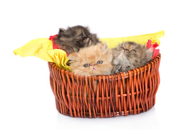 Die Katzenpille verhindert ungewollten Nachwuchs.