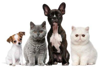 Es gibt Haustiere für Allergiker.