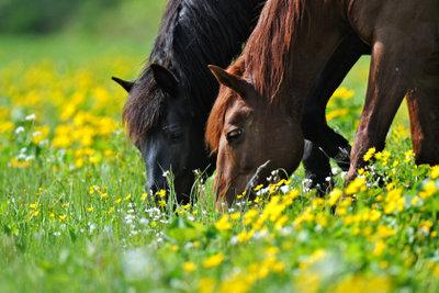 Pferdezucht wird schnell als Liebhaberei abgestempelt.
