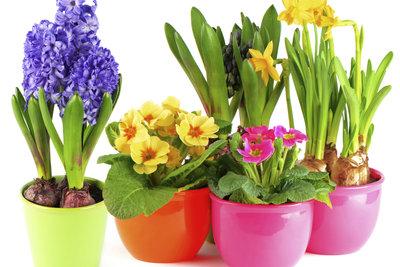 Ein bunte Ansammlung von Frühjahrsblumen.