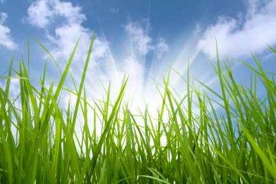 Schöner Rasen muss gepflegt werden.