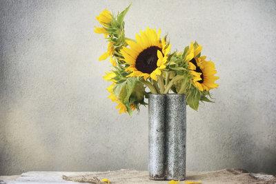 Sonnenblumen in der Vase bringen Farbe und Frische in jedes Zuhause.