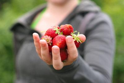 Erdbeeren kommen zuerst in Rumtöpfe.