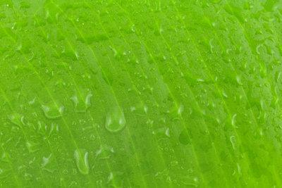 Grünpflanzen Im Schlafzimmer : gr npflanzen im schlafzimmer das sollten sie dabei beachten ~ Watch28wear.com Haus und Dekorationen