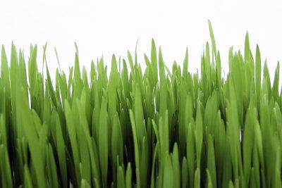 Vorsicht beim Rasenmähen bei Hitze.