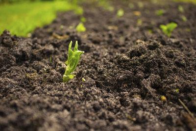 Verbessern Sie Ihren Gartenboden richtig!