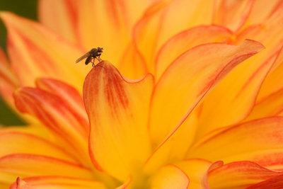 Pflanzen können Ursache für Fliegen sein.