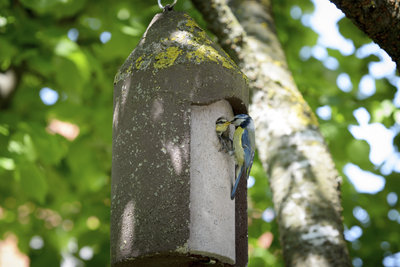 Nistkästen sind das ganze Jahr über wichtig für den Vogelschutz.