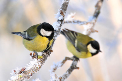 Mit Nistkästen helfen Sie Singvögeln.
