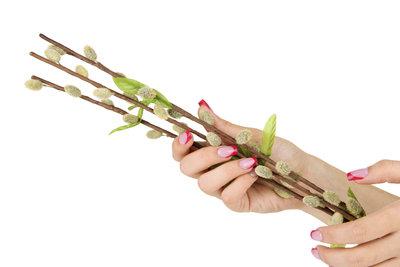 Weidenkätzchen müssen Sie nach der Blüte beschneiden.