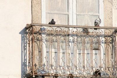 Tauben dürfen nicht getötet werden!