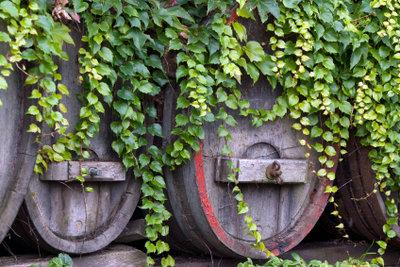 Alte Weinfässer eignen sich als Regentonnen.