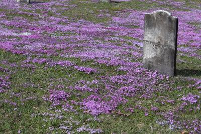 Eine Grabplatte braucht regelmäßige Pflege.