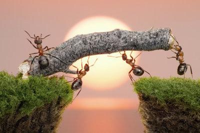 Ameisen faszinieren, sind aber leider lästig.
