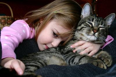 """Beim Zusammenführen von Katzen, sollte man sich besonders um die """"alte"""" Katze kümmern"""