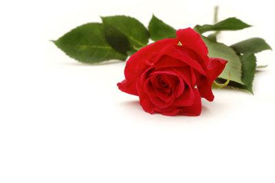 Rosen als Grabschmuck