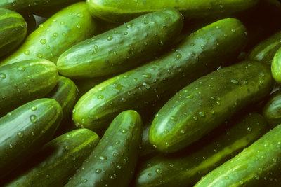 Die Gurke ist eine der ältesten und beliebtesten Kulturpflanzen.