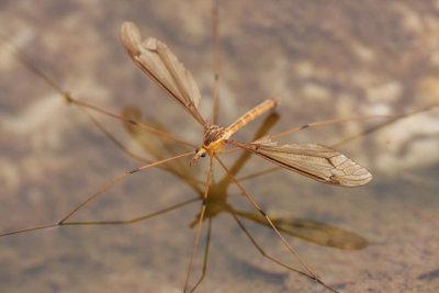 Mücken vertreiben funktioniert sehr gut mit bewährten Hausmitteln