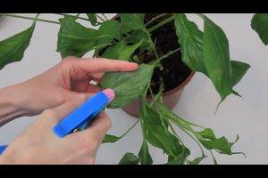 Spülmittel gegen Blattläuse einsetzen - so gelingt die richtige Mischung