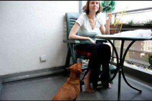 Hundeerziehung ohne Stress - so funktioniert's