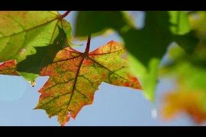 Blätterarten - so unterscheiden Sie die häufigsten Bäume