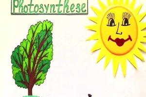 Photosynthese - Erklärung für Kinder