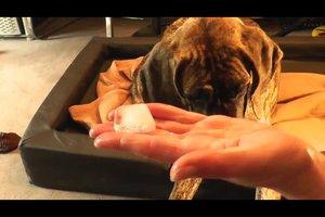 Wespenstich beim Hund im Maul - so leisten Sie schnelle Hilfe