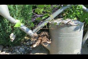Zinkwannen für den Garten als Kübel effektvoll bepflanzen