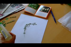 Herbarium erstellen - so geht's